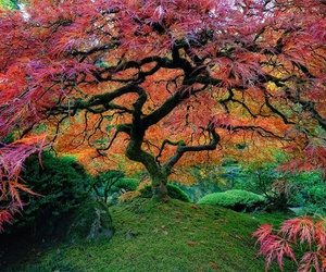 tree, nature, and colors image