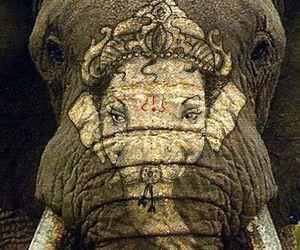 animal, elephant, and Ganesha image