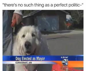 choices, dogs, and funny image
