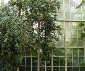 arboretum image