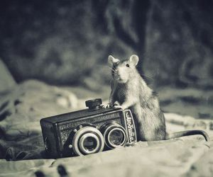 b&w, rat, and cute image