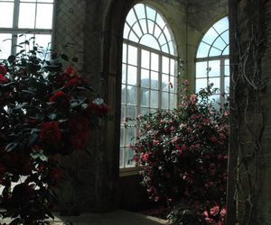 flowers, windows, and rose image