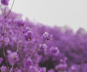 flowers, floral, and purple image