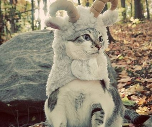 animal, costume, and pussy image