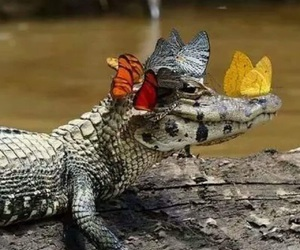 alligator, butterflies, and crocodile image