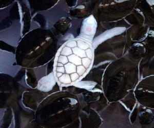 albino and turtle image