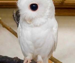 owl, albino, and animal image
