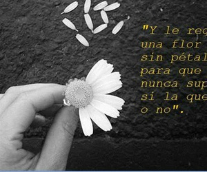 frases, phrases, and principe image