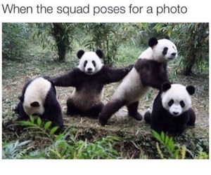 panda, funny, and friends image