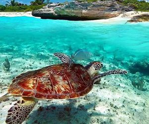 beach, turtle, and summer image