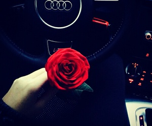 rose, audi, and car image