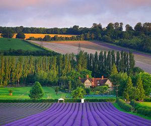 england, eynsford, and field image
