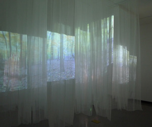 clothes, installation, and forest image