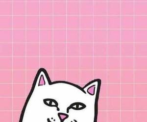 gato cool jajaja fondos image