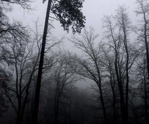 tree, black, and dark image