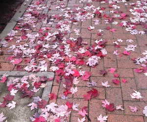 pink, autumn, and leaves image
