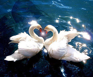 animals, heart, and nature image