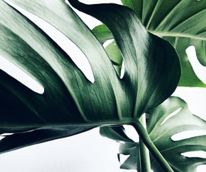 green, leaves, and plants image