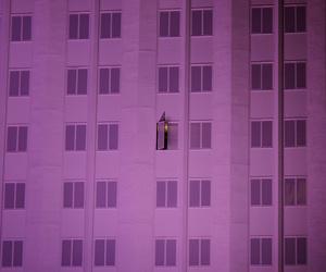 purple and windows image