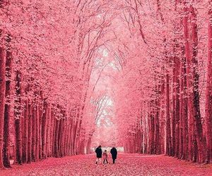 pink, tree, and beautiful image