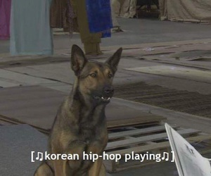 cute dog, dog, and funny image