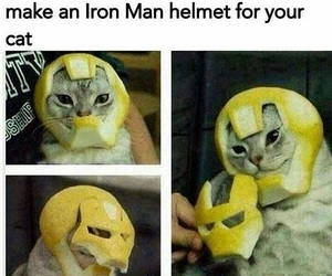 funny, cat, and iron man image
