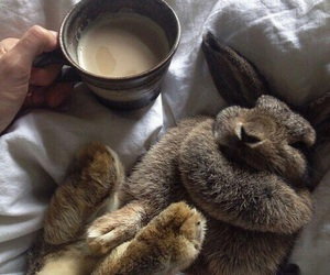 rabbit, coffee, and bunny image