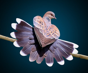 animals, heart, and pigeon image
