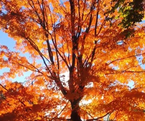 autumn, tree, and beautiful image