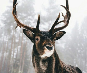 animal, winter, and deer image