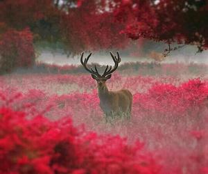 deer, animal, and red image