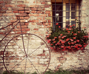 bycicle, cycling, and flowers image