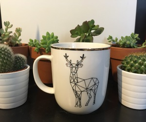 cactus, tea, and cossy image
