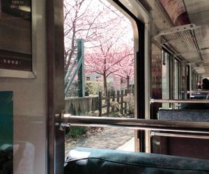 japan, sakura, and train image