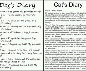funny and cats vs dogs image