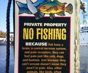 animals, fish, and vegan image