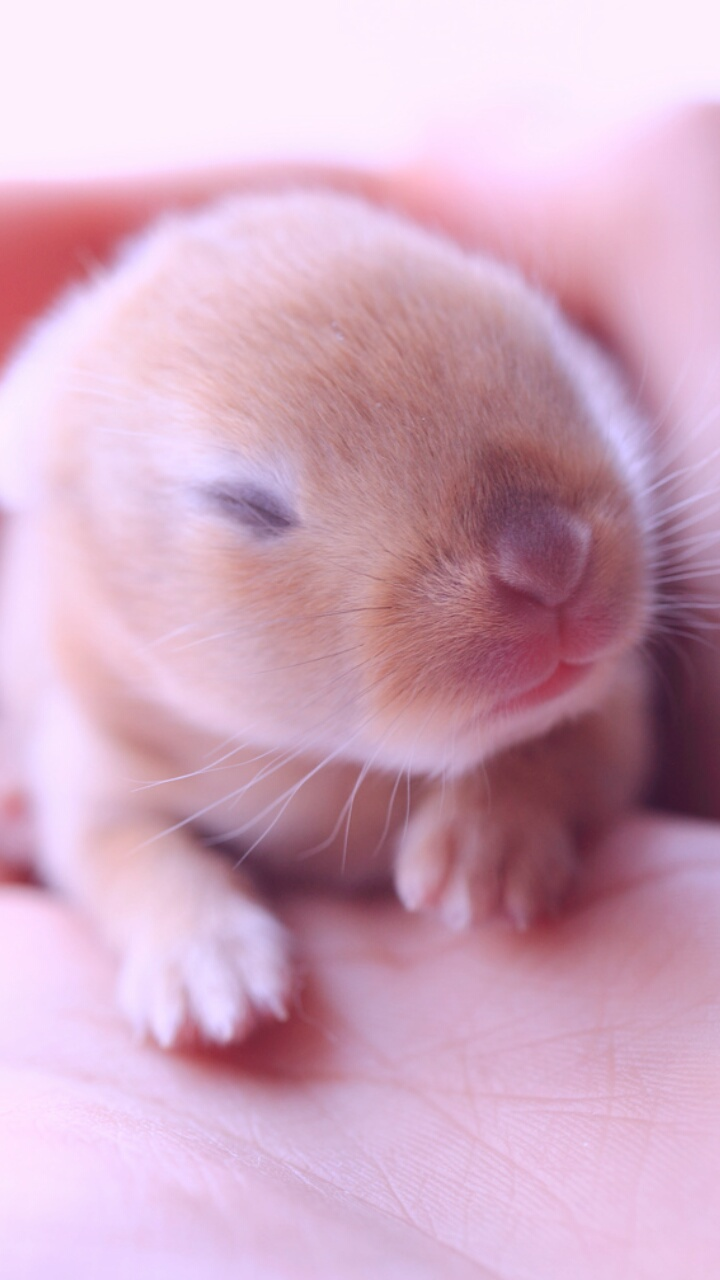 Animals Baby Baby Bunny Background Beautiful Beauty Bunny Cute Animals Cute Baby Cute Bunny Iphone Nature Photo Pink Purple Still Life Wallpaper Wallpapers We Heart It Wallpaper Iphone Pastel Color Beautiful Animals