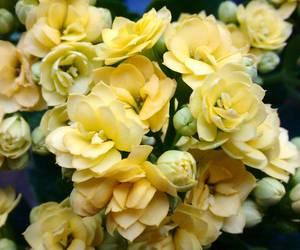 beautiful, beautiful day, and flower image