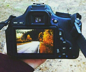 fall, autumn, and photography image
