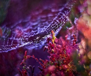 colorful, morning dew, and spider web image