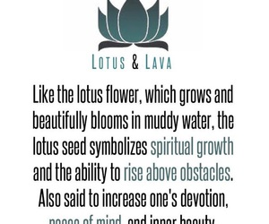 lotus, tattoo, and meaning image
