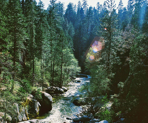 river and sequoia-national-park image