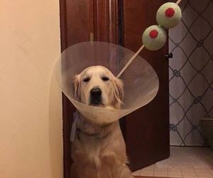 dog, funny, and martini image
