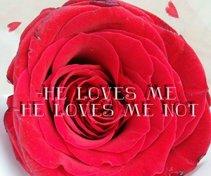 easel, he loves me, and rose image