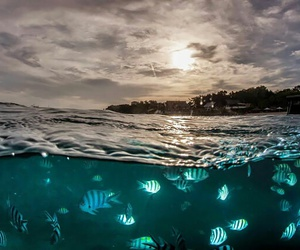 beauty, colorful, and underwater image