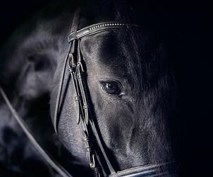 horses and photo image