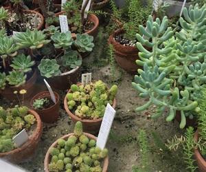 botanic, cacti, and cactus image