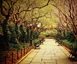 avenue, romantic, and trees image