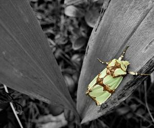 b&w, bug, and nature image