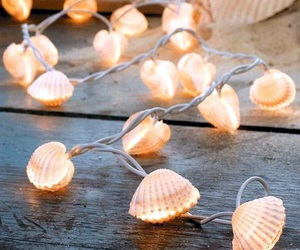 light and shells image